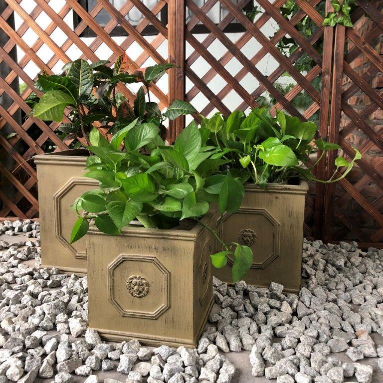 DurX-litecrete Lightweight Concrete Lion Head Square Brownstone Planter - Set of 3